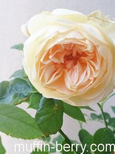 2013-05-17 rose300